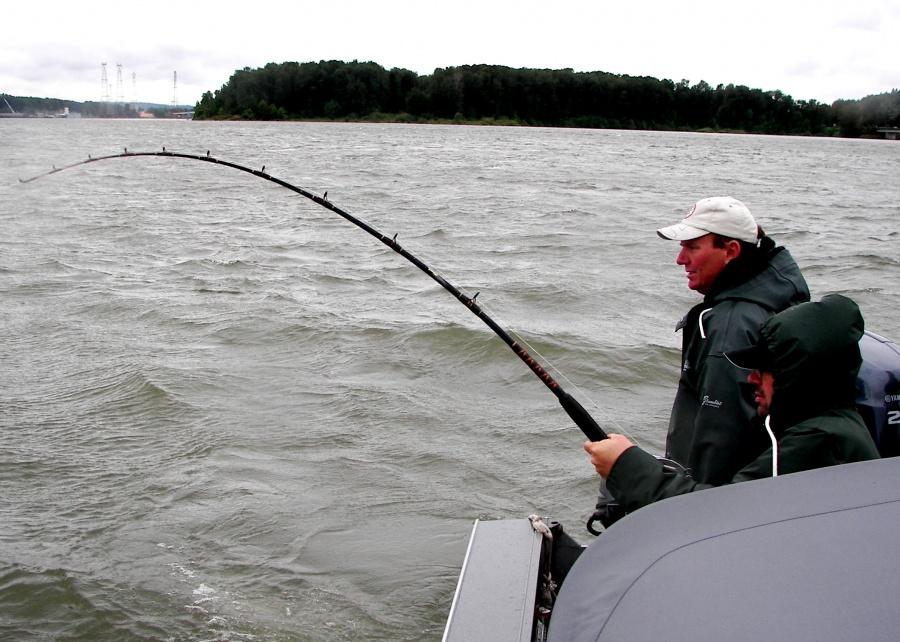 Shad sturgeon 11 kingfisher adventures for Fishing columbia river