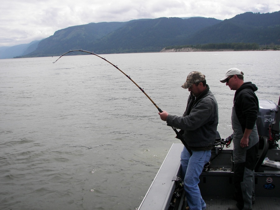 Shad sturgeon 43 kingfisher adventures for Fishing columbia river